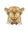 ethnic camel vector image vector image