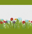 spring flowers and grass border isolated on vector image vector image