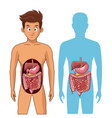 digestive system cartoon vector image