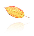 dry leaf vector image vector image
