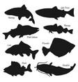 fish silhouettes fishing and fish market vector image
