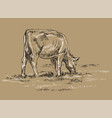 hand drawing cow vector image vector image