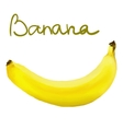 Painted banana vector image