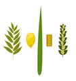 sukkot judaic holiday traditional symbols vector image vector image