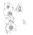Flower of white orchid vector image