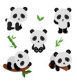 adorable pandas in flat style vector image
