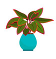 aglaonema house plant vector image vector image