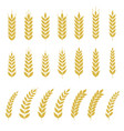 set of wheat or barley icon vector image vector image