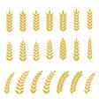 set wheat or barley icon vector image