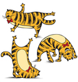 sports funny cat makes exercise vector image vector image