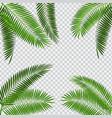 palm leaf on transparent vector image vector image