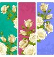 White Rose frames set vector image
