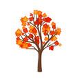 autumn maple on a white