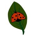 ladybug on a leaf on white background vector image vector image