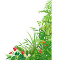 side corner border with tropical plants vector image vector image