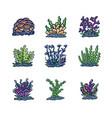 underwater plants vector image