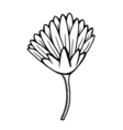 flower 209 12 vector image vector image