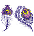 isolated peacock feathers for your design vector image vector image