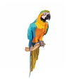 Colorful parrot on a branch vector image vector image