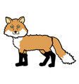dog fox vector image vector image