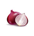 fresh whole and sliced red onion bulbs vector image vector image