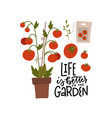 hand drawn tomato bush in pot with seeds vector image vector image