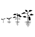 pepper sprout vector image vector image