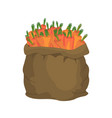 carrot burlap bag sack of vegetables big crop on vector image