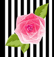 pink rose bud insolated flower on vector image vector image
