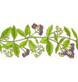 allspice branch pattern vector image