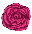 beautiful red rose isolated on white background vector image vector image