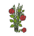 broken roses color sketch engraving vector image