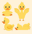 cute yellow duck character set vector image