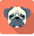 dog Pug icon flat design vector image