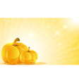 Pumpkins and shine vector image vector image