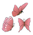 butterflies with red wings color nature summer vector image
