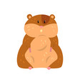 cute cartoon hamster character sitting funny vector image vector image