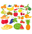 fruit and berries icon set vector image vector image