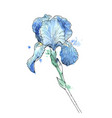 iris flower isolated on white background hand vector image vector image