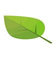 poplar tree leaf icon isometric style vector image vector image