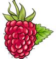 raspberry fruit cartoon vector image vector image