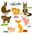 set cartoon cats characters vector image