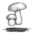 tricholoma vintage sketch dove-coloured mushroom vector image