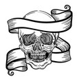 with a human skull and ribbon vector image