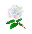 multicolored flower camellia japonica vector image vector image