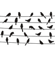 birds on wires vector image vector image