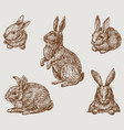 hand drawings five cute rabbits vector image vector image