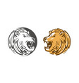 lion roars logo or label animal wildlife emblem vector image