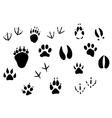 Animal footprints and tracks vector image