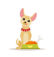 chihuahua dog preparing for food vector image vector image